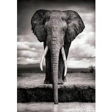 대형_코끼리
